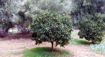 Interno del Giardino Botanico di via Demetra ad Agrigento