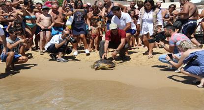 Liberazione di una Tartaruga marina curata nel centro di recupero di Cattolica Eraclea