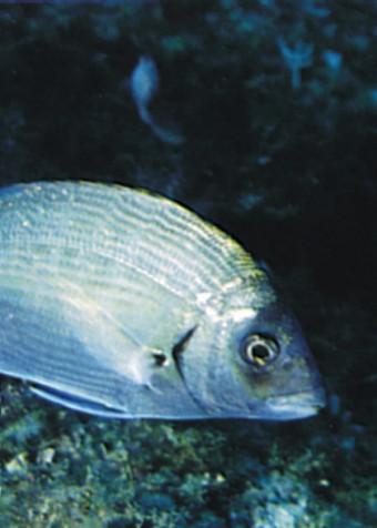 fotografia di un pesce con sfondo di flora marina