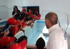 """Gli alunni dell'IC """"Crispi"""" di Ribera osservano la tartaruga marina ricoverata al CRFS di Cattolica Eraclea"""