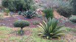 Aloe e agavi